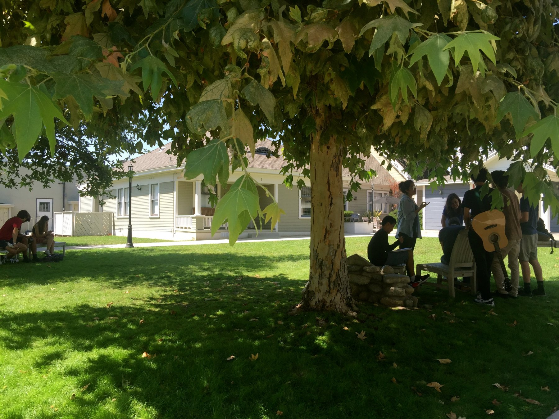 HS quad with shady tree