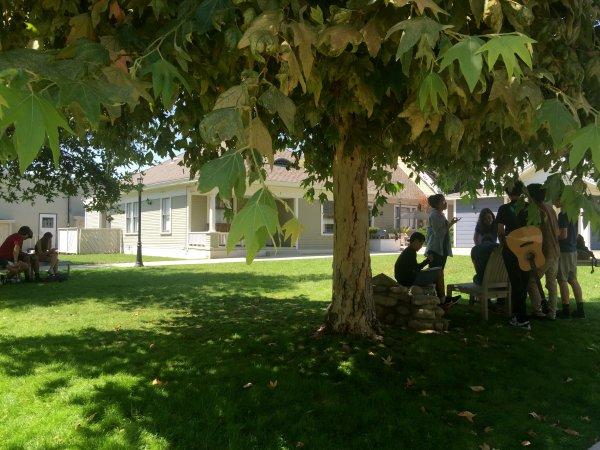 HS campus grassy quad tree leaves